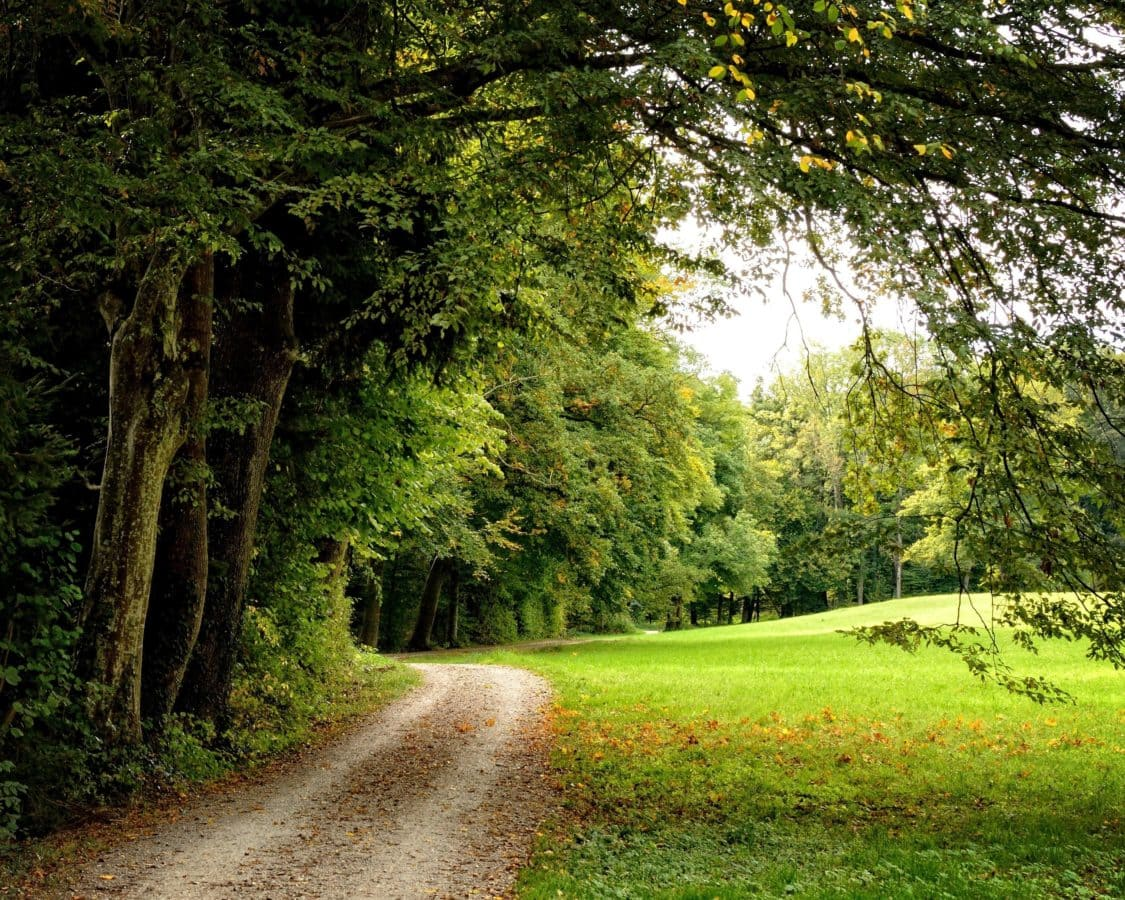 leaf, tree, wood, landscape, nature, forest road, grass, forest, ecology