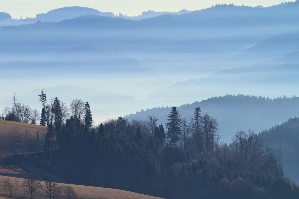 snow, tree, wood, fog, dawn, winter, landscape, mountain