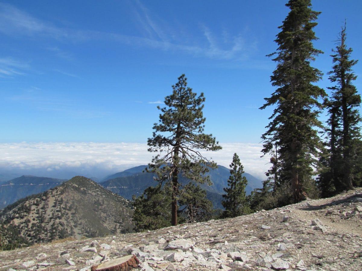 landskab, bjerg, vandretur, sne, blå himmel, natur, fyrretræ, dal
