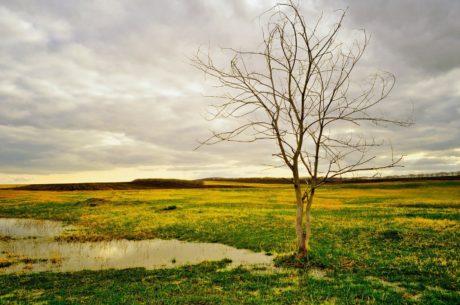 grønt græs, felt, himmel, natur, landskab, sump, landskab