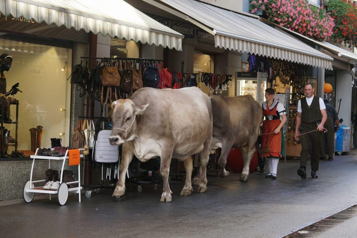 street, cattleman, street festival, woman, costume, festival, shop, agriculture