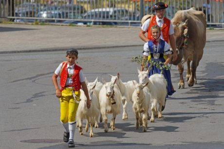 people, man, woman, goat, cattle, festival, walk