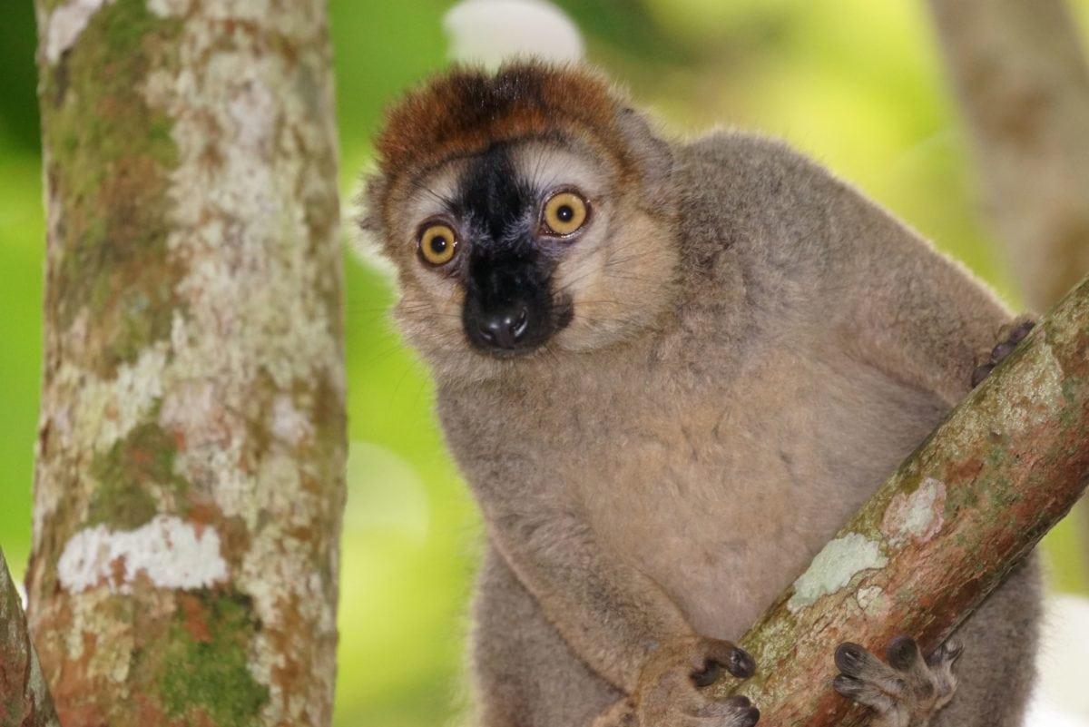majmun, krzno, životinja, grana, divlja, stablo, oči, portret