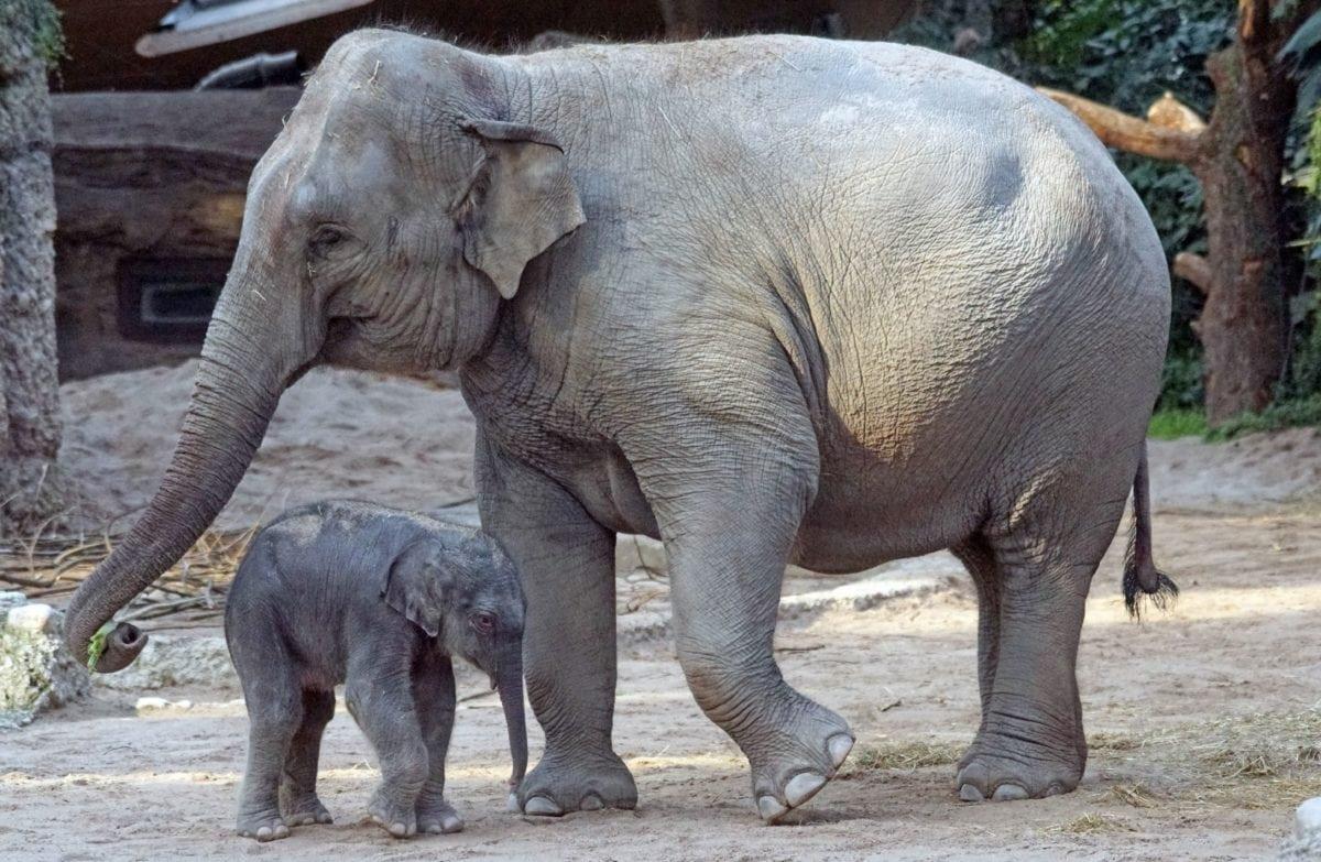 дивата природа, слон, животните, природата, дивата, Safari