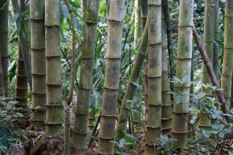 nature, wood, tree, bamboo, leaf, forest, outdoor, plant