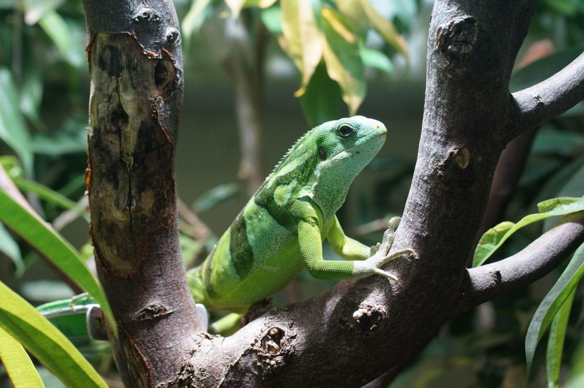wildlife, nature, jungle, tree, animal, rainforest, leaf, reptile, lizard