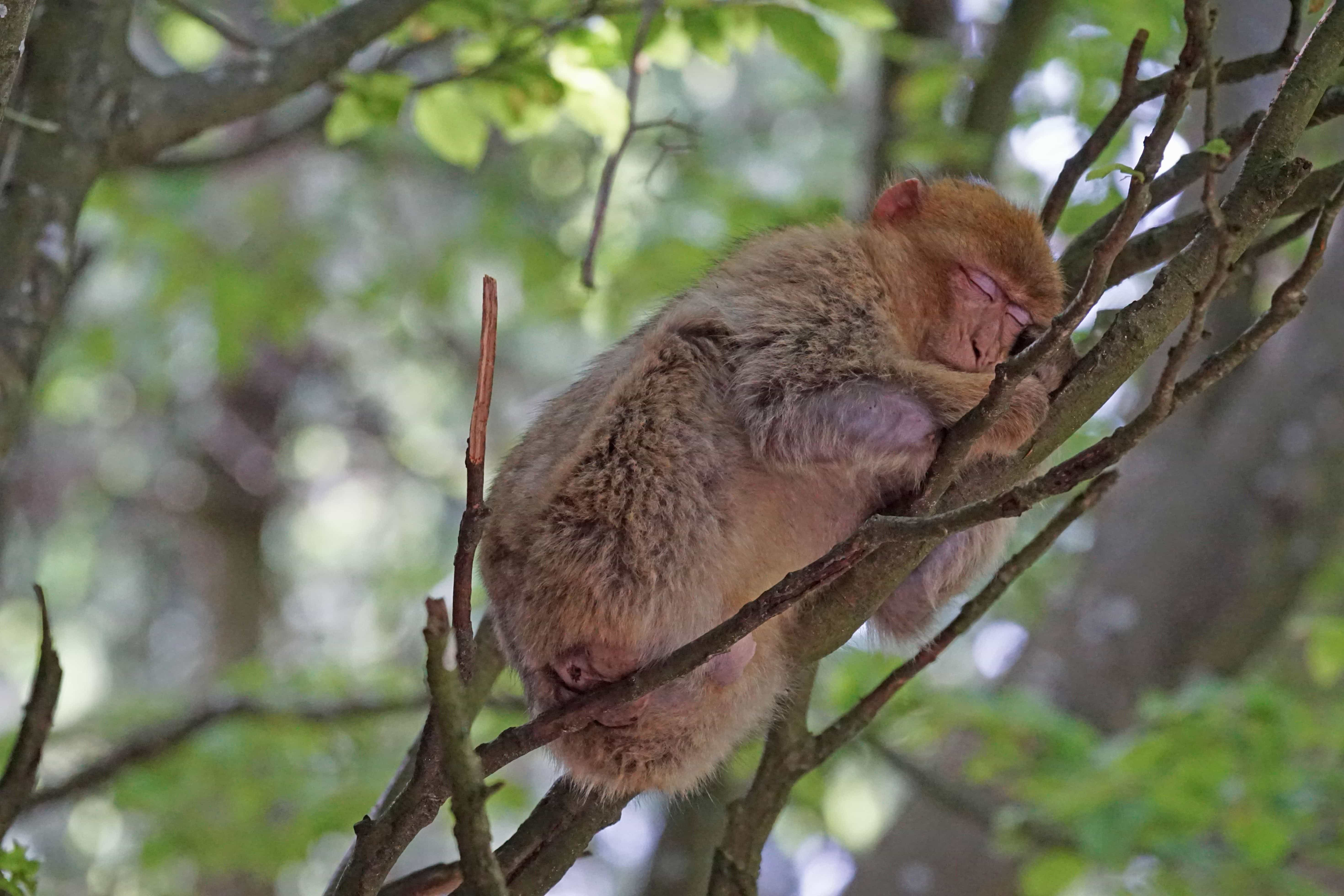 Картинки мартышка на дереве