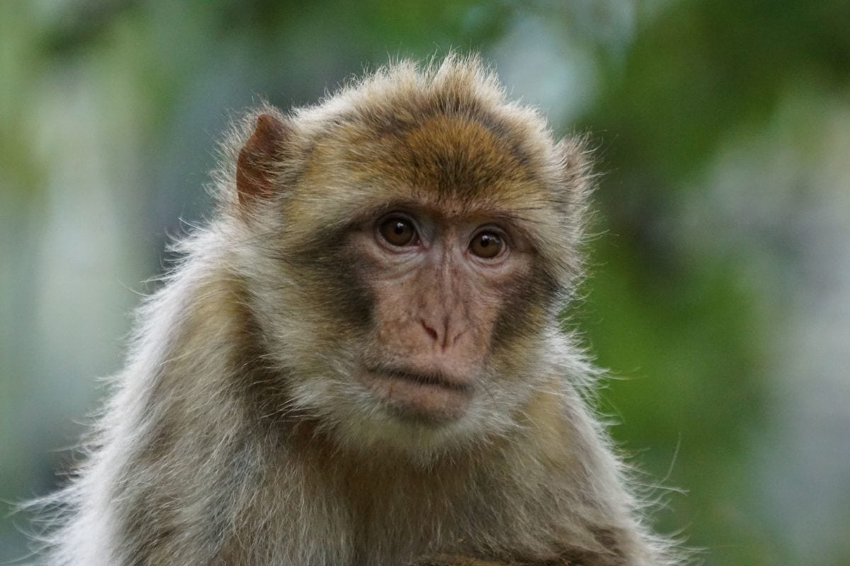 mignon, primate, nature, singe, faune, animal
