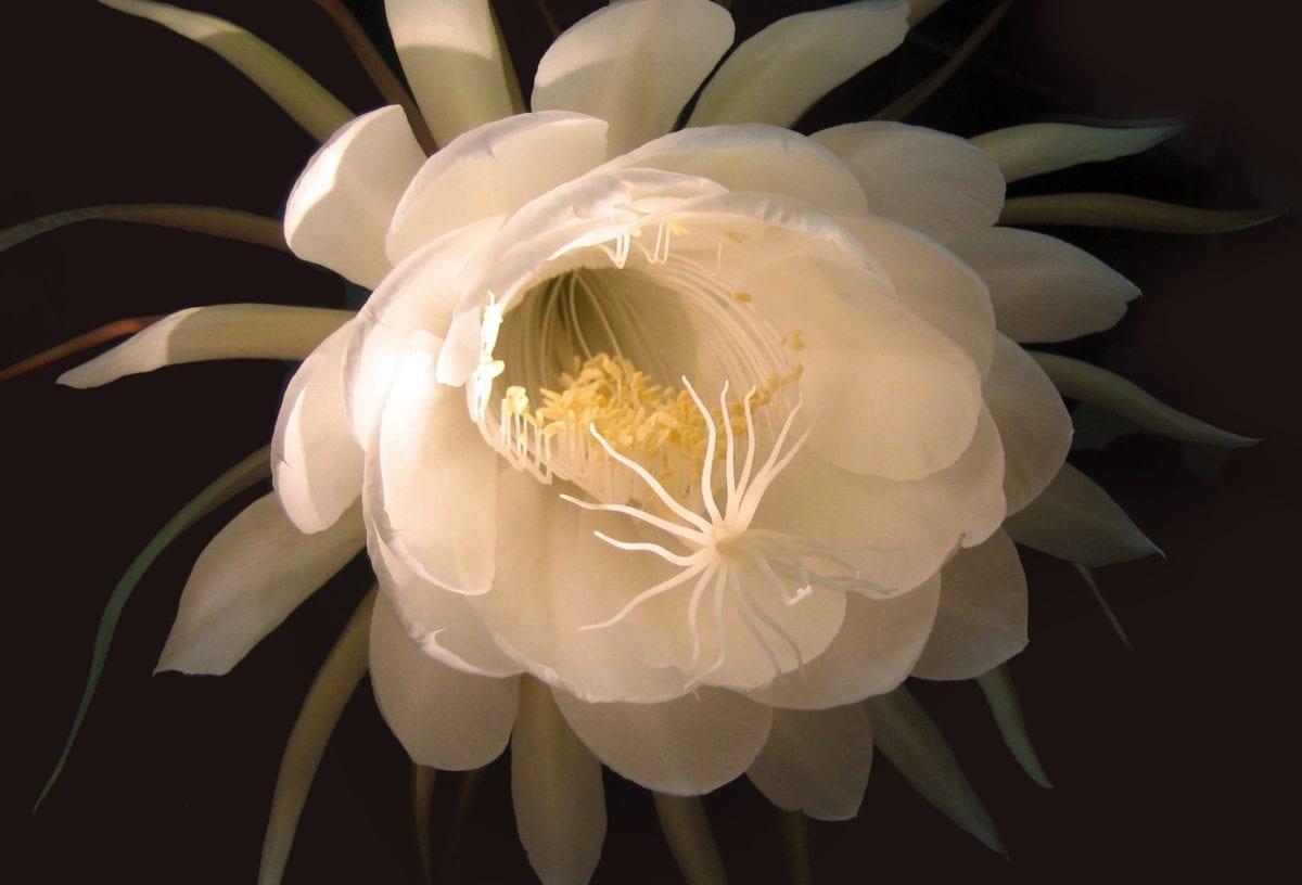 krásné, příroda, květiny, fotografické studio, stín, rostlina, Bloom, květ