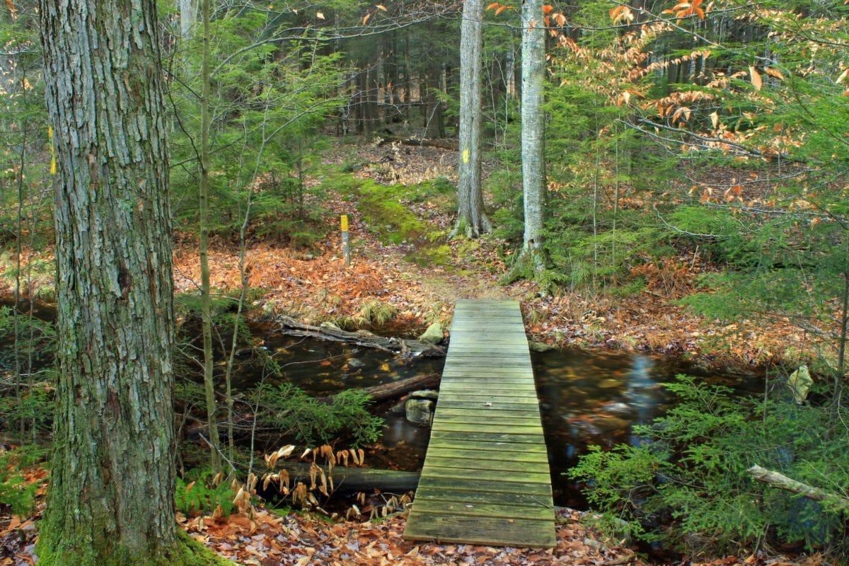 дървен мост, листа, пейзаж, природа, река, дърво, дърво, Градина, горски път