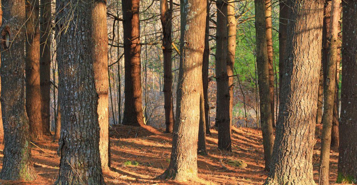 tree, leaf, nature, wood, forest, autumn season, sunshine, outdoor
