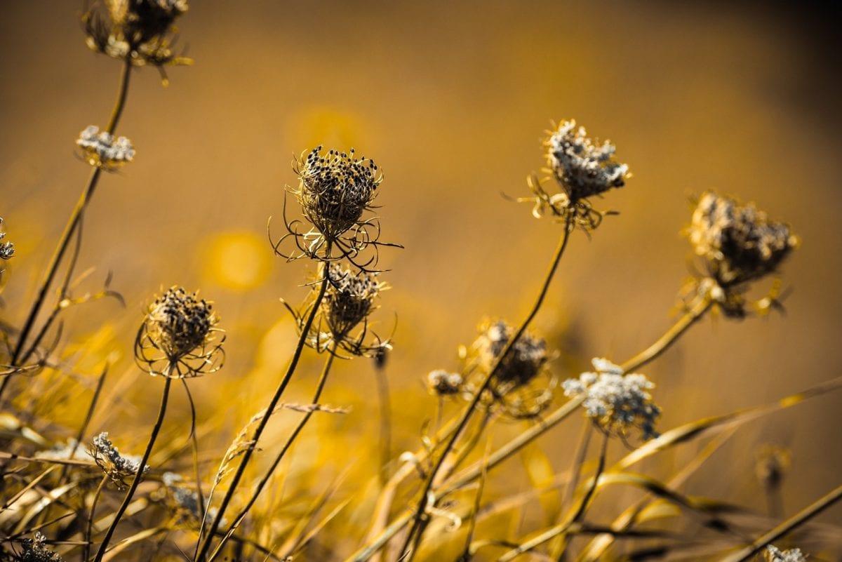 trawa, sezon letni, kwiat, natura, roślina, ziele, łąka