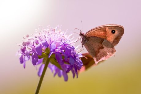 nature, flower, daylight, brown, butterfly, insect, plant, garden, blossom