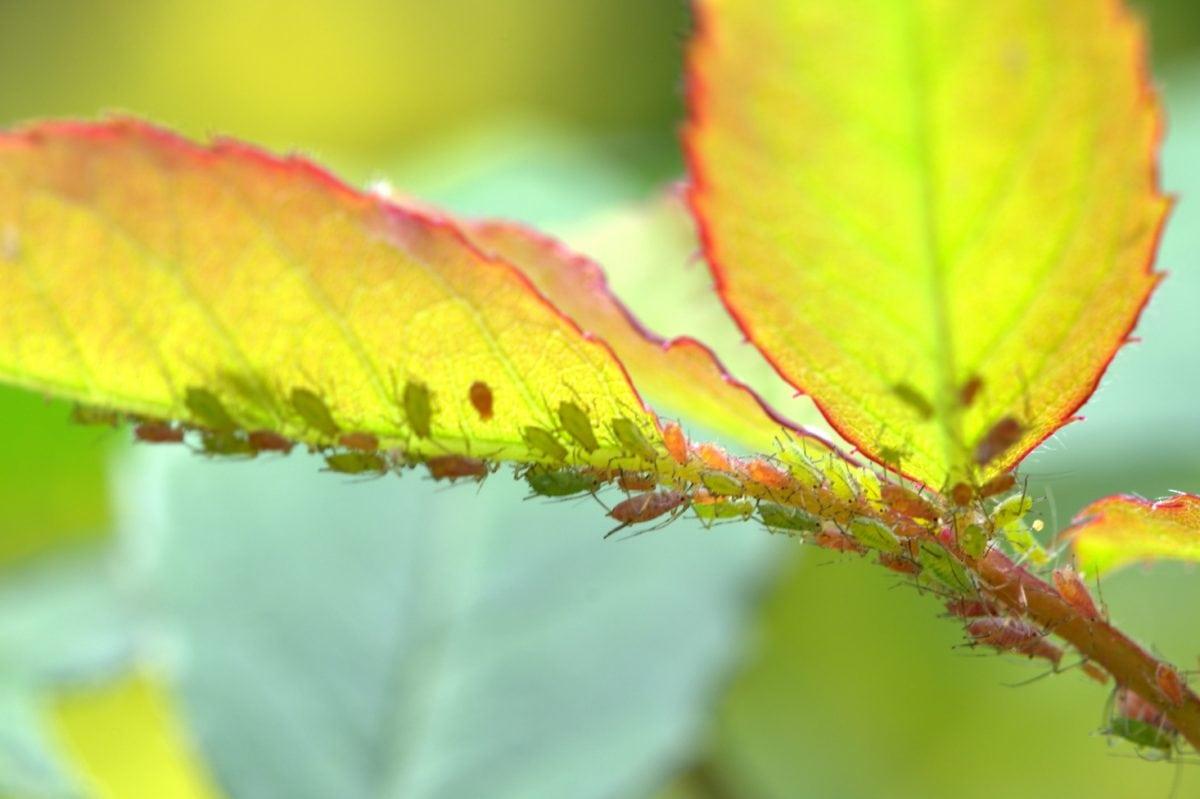 nature, été, feuille, plante, insecte, feuille verte, branche, temps de source