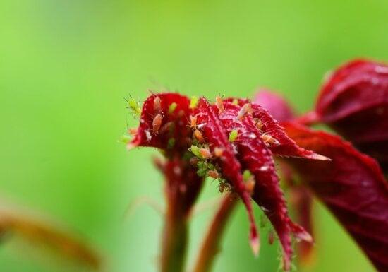 Kleiner Insekt, Käfer, Garten, Blume, Natur, Blatt, Sommer, Kraut, Pflanze