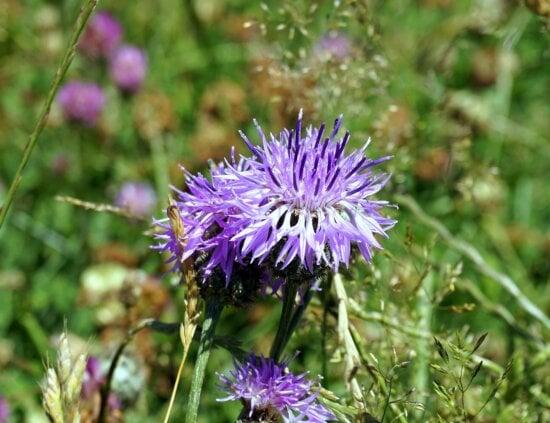 Blumenfeld, Garten, Wildblume, Wildnis, Natur, Sommer