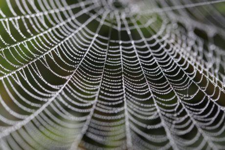 garn, mönster, spindelnät, krångliga, spindelnät, dagg, fukt