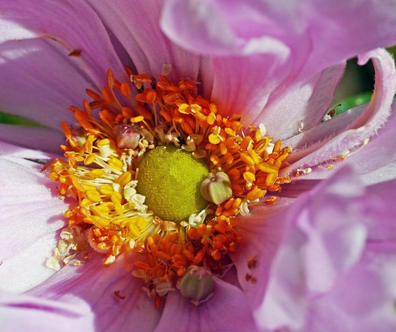 庭、花、花びら、花粉、詳細、蜜、自然、葉、夏