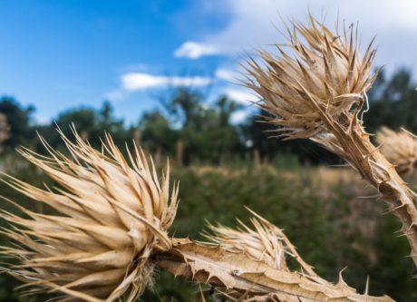 сухой, природа, трава, дневной свет, на открытом воздухе, синее небо, поле, сельское хозяйство