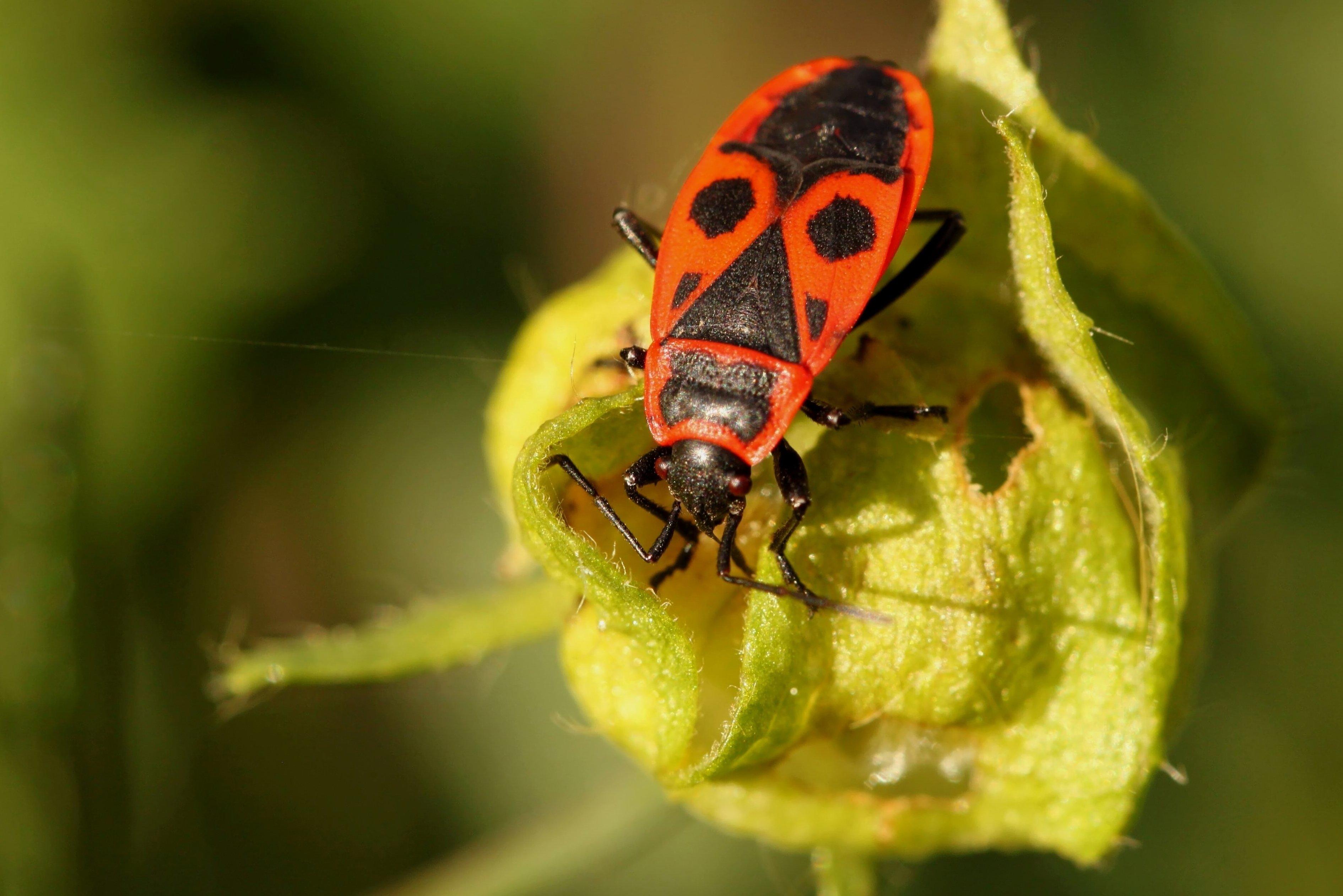 Картинки с насекомыми, открытку для