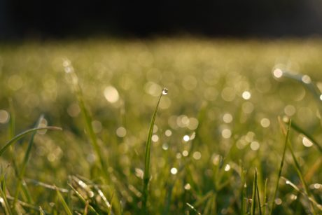 summer rain, nature, green grass, moisture, wet field, dew, sunshine, lawn