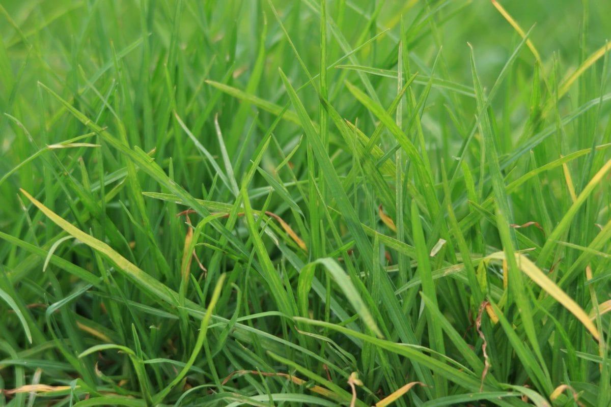 have, græs, sommer, jord, jord, græsplæne, miljø, blad, natur, Mark