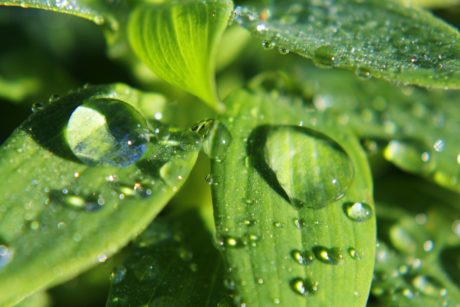 wet, moisture, droplet, dew, rain, daylight, liquid, raindrop, green leaf