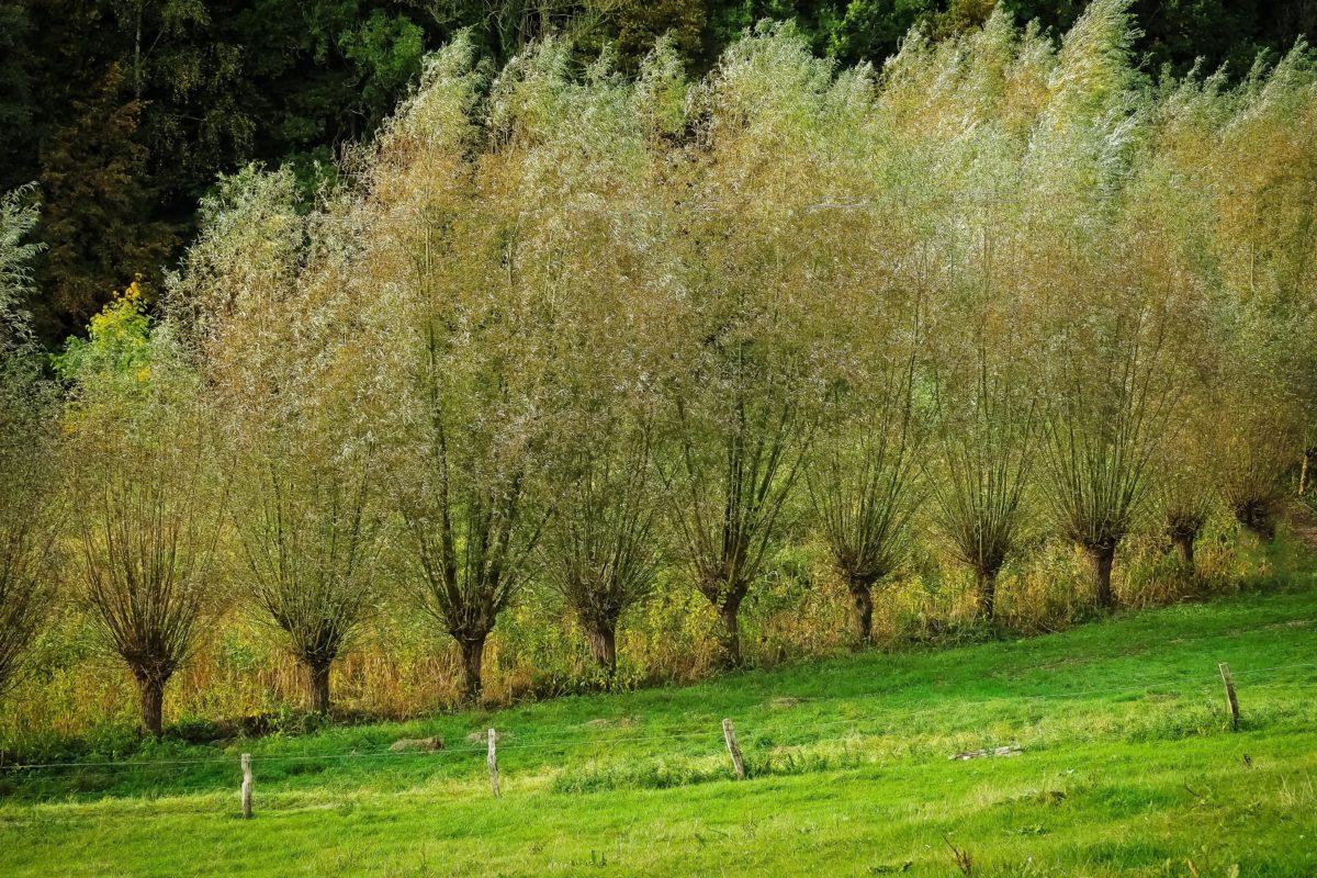 ออร์ชาร์ด, ต้นไม้, ภูมิทัศน์, ใบ, หญ้า, ธรรมชาติ
