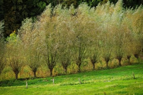 verger, arbre, paysage, feuille, herbe, nature, colline, plante