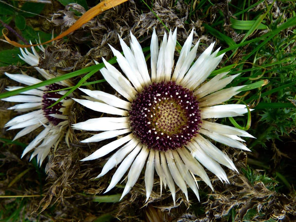 nature, fleur blanche, plante, pétale, fleur, pistil, heure d'été