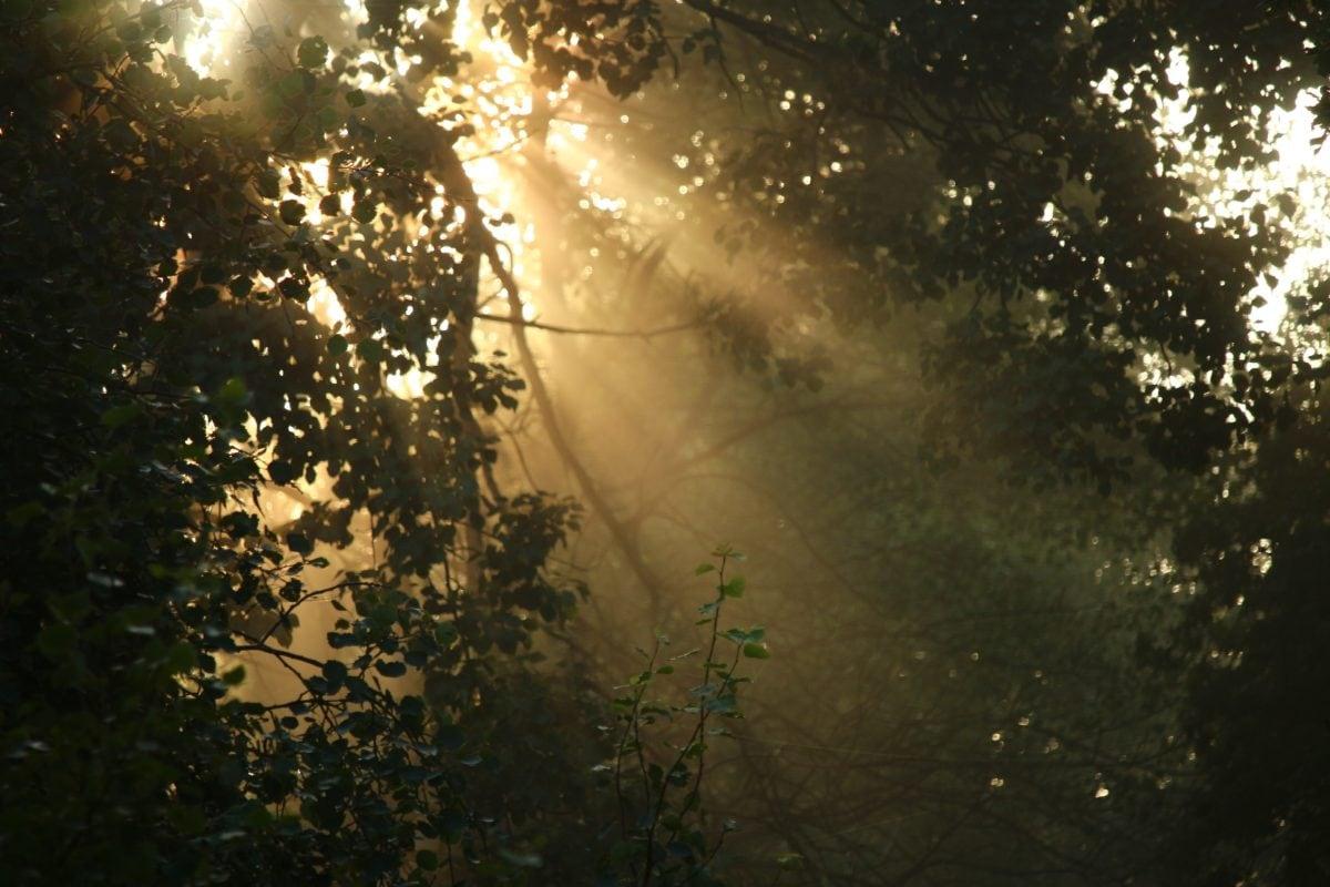 sunshine, Sun ray, landscape, tree, nature, forest, sun, outdoor