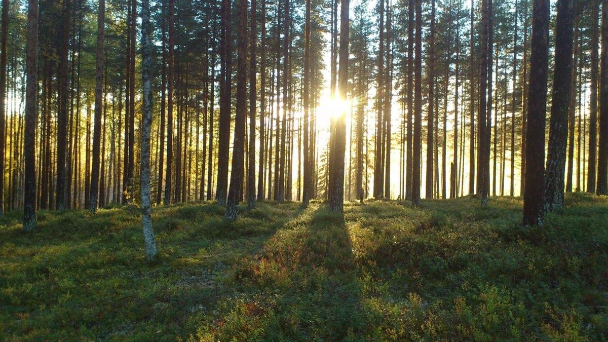 fog, landscape, dawn, tree, leaf, conifer forest, nature, wood, environment