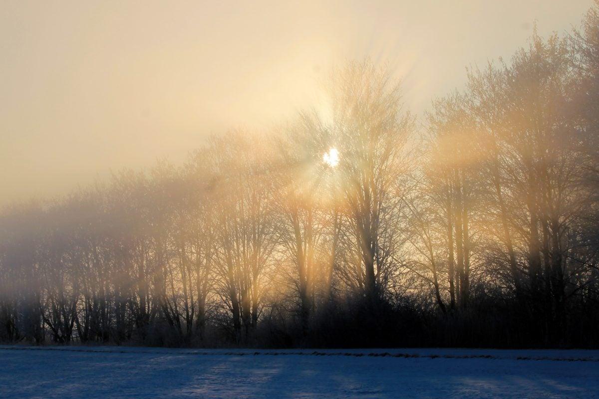 sneh, studený deň, hmla, strom, zima, hmla, svitania, mráz, krajina
