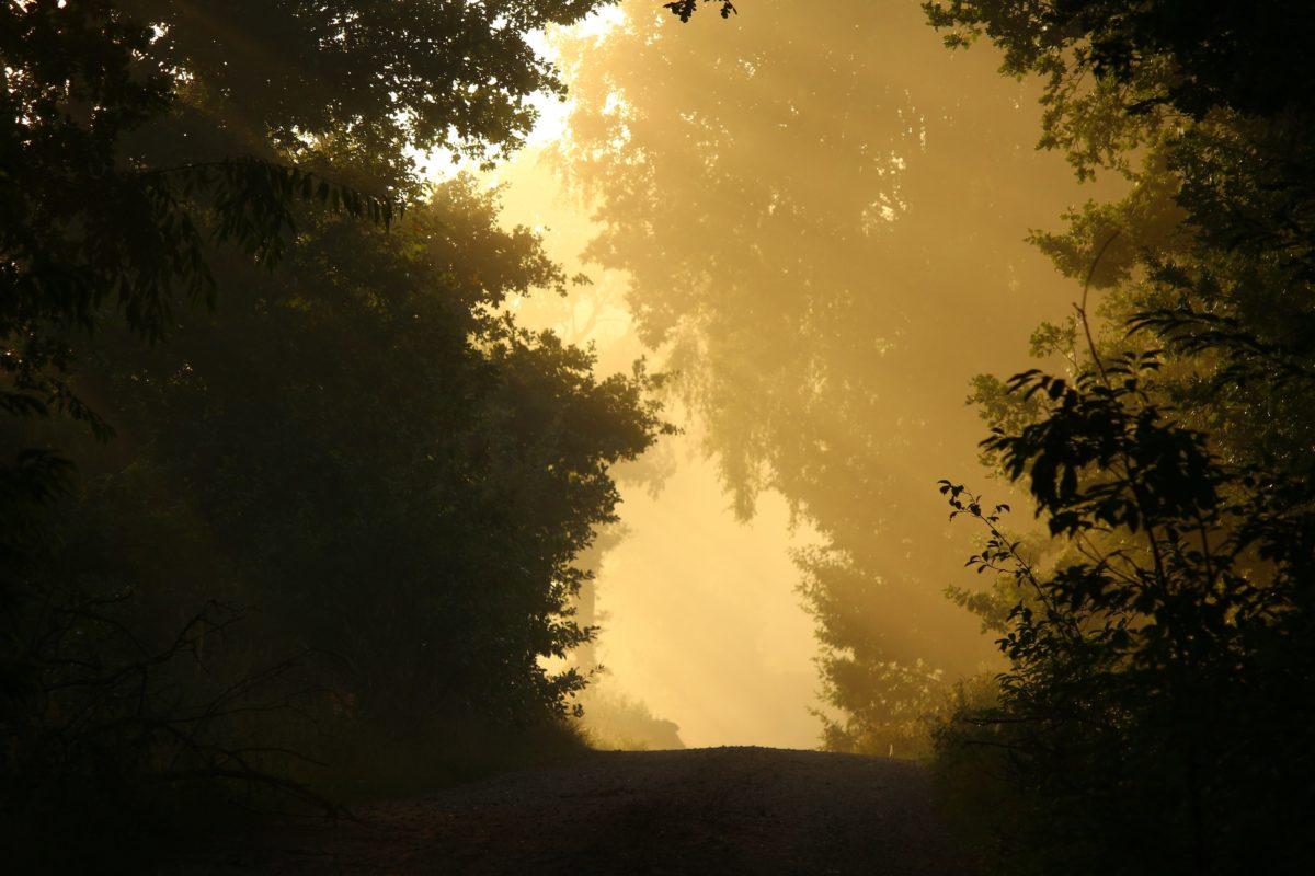árbol, niebla, paisaje, sol, cielo, bosque, al aire libre, puesta del sol