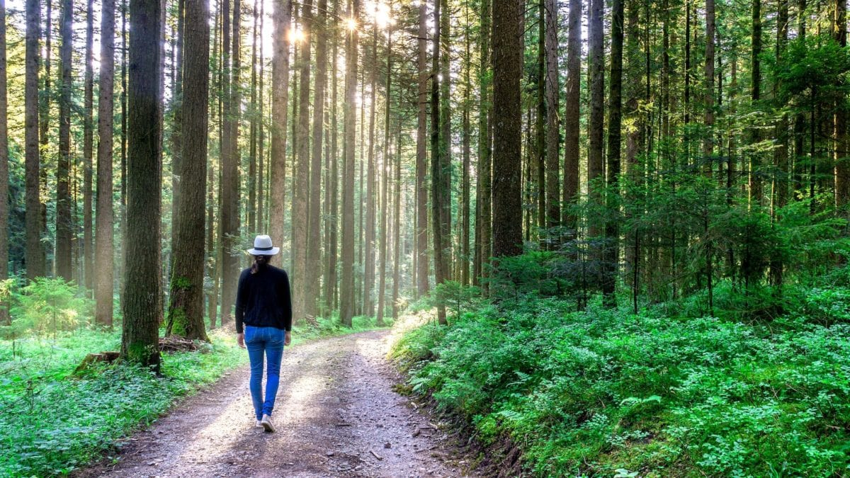 ympäristö, henkilö, vaellus, Dawn, puu, maisema, vaellus, puu, luonto