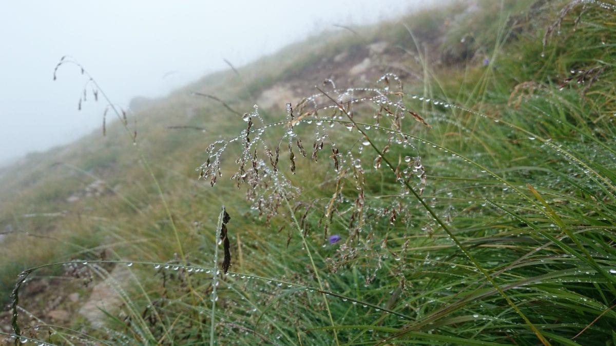rain, moisture, dew, nature, flower, green grass,landscape, herb, plant, field