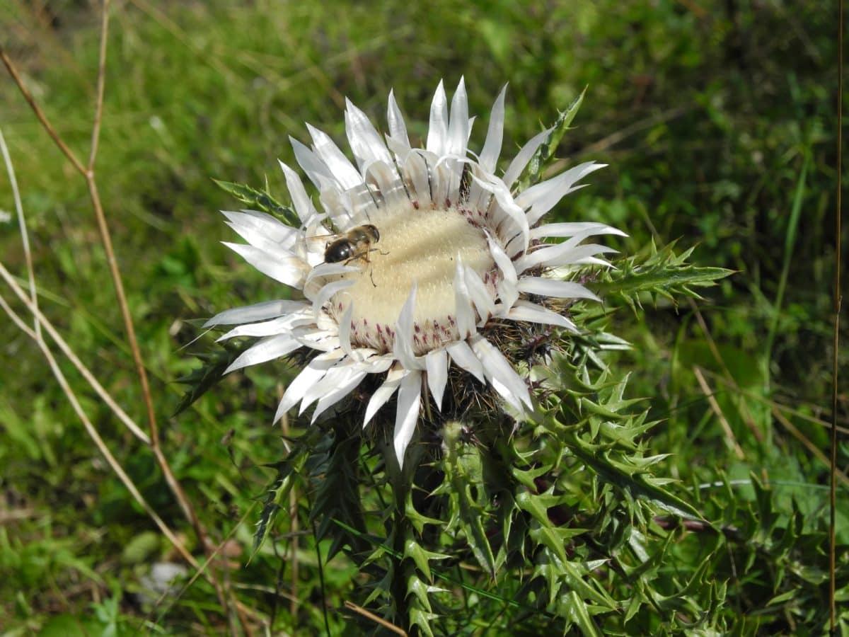 природа, летен сезон, зелена трева, бяло цвете, дневна светлина, билка