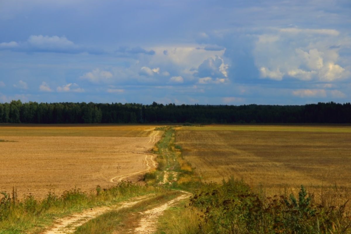 road, landscape, agriculture, tree, blue sky, land, field, atmosphere