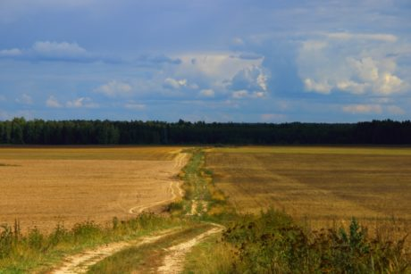 road, landscape, agriculture, tree, blue sky, land, field, atmosphere