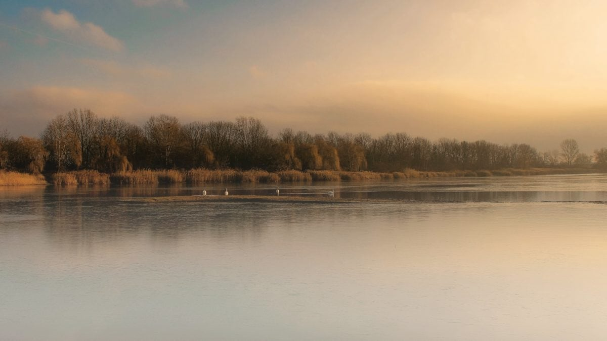 sunset, reflection, tree, lake, landscape, dawn, water, river, ecology