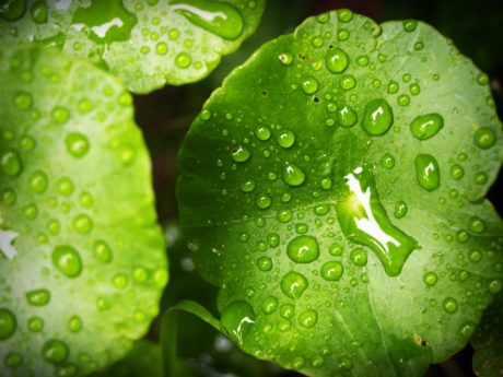 nature, wet, garden, rain, liquid, dew, green leaf, strawberry, water, detail