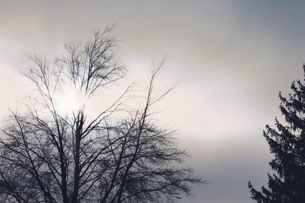 목재, 새벽, 안개, 풍경, 겨울, 나무, 안개, 눈, 자연