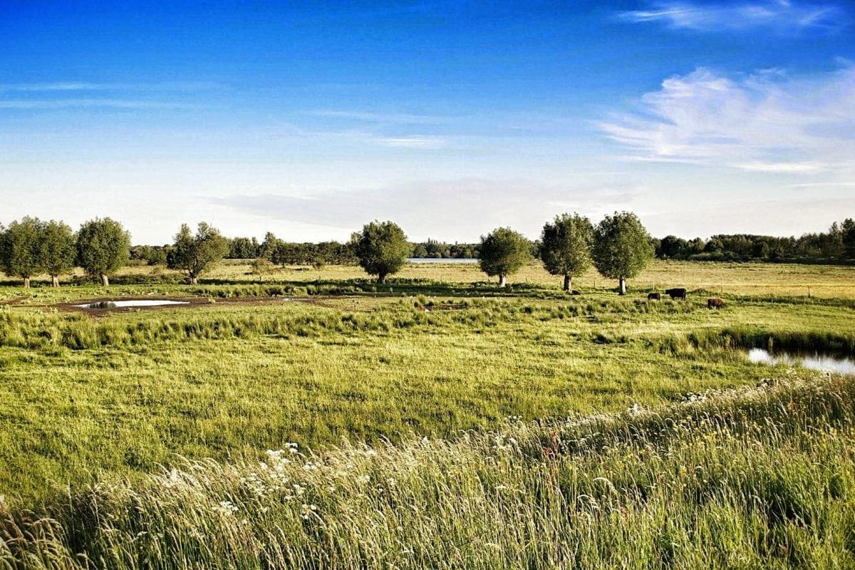 agriculture, grass, landscape, blue sky, cloud, nature, field, cereal