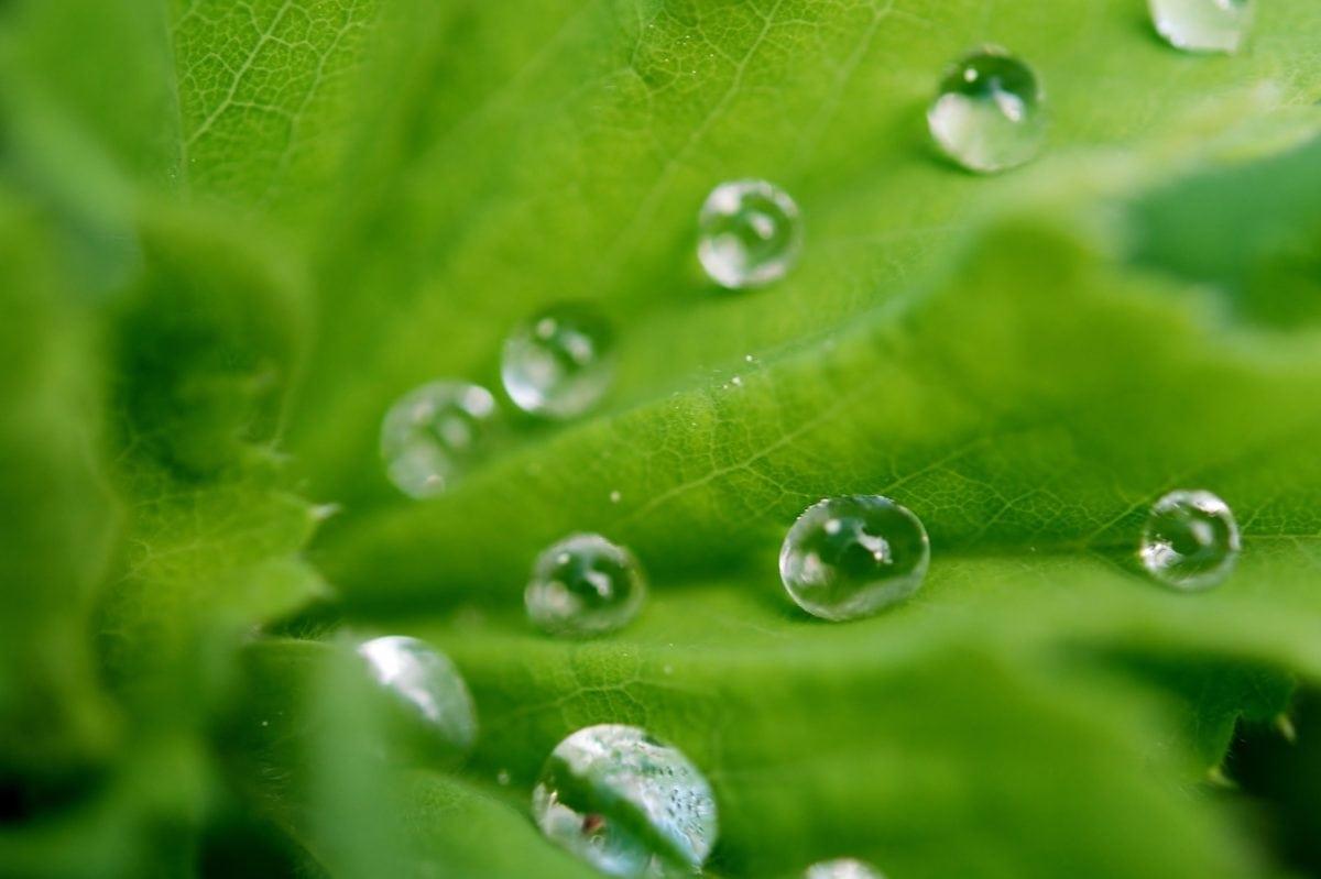 dew, moisture, green leaf, environment, droplet, wet, raindrop, rain