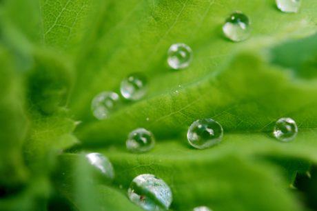 dauw, vocht, groen blad, milieu, druppel, natte, regendruppel, Rain