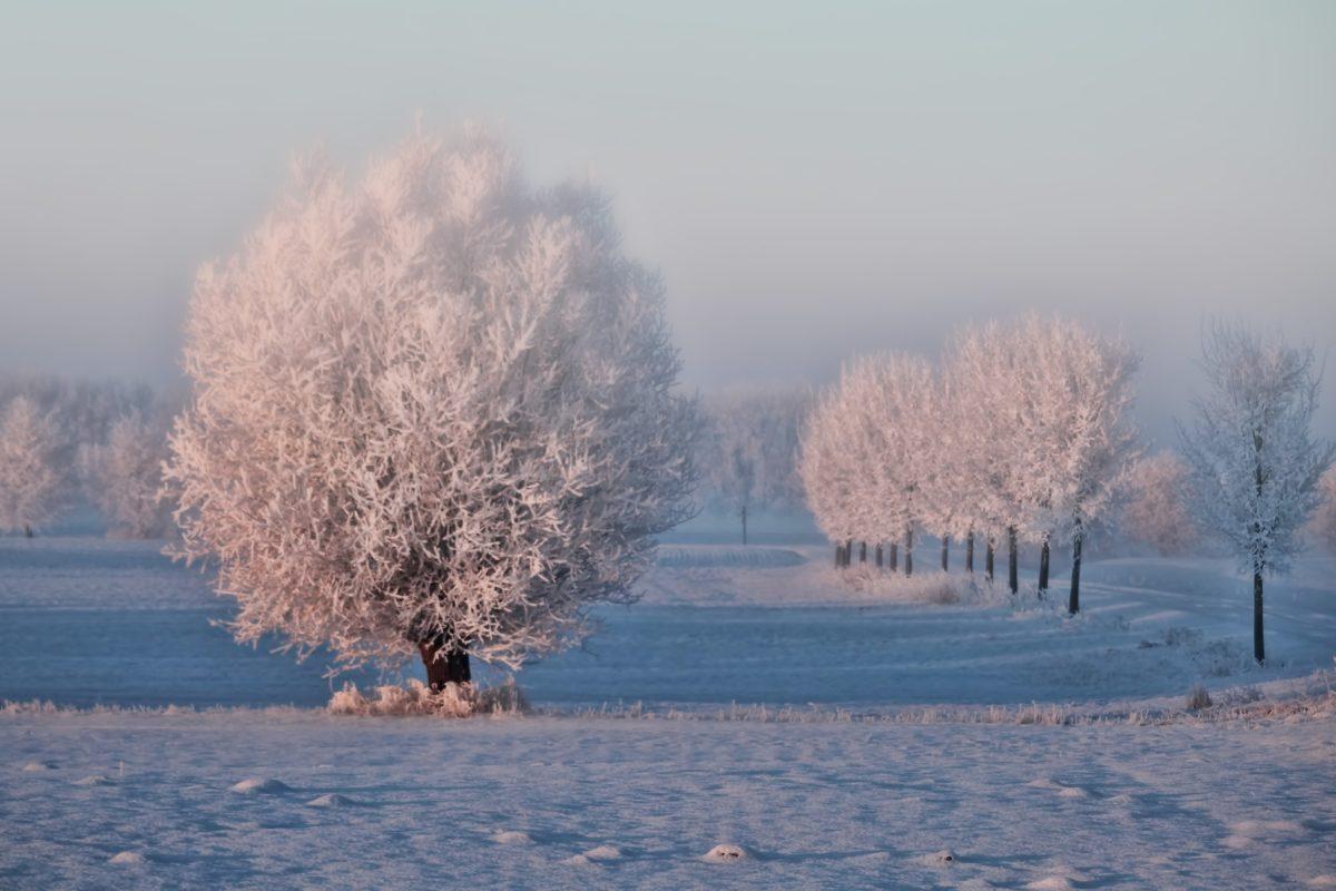 landskap, is, snø, kulde, Frost, landskap, tre, vinter, tåke, frossen
