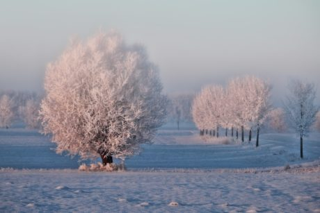 landscape, ice, snow, cold, frost, countryside, tree, winter, fog, frozen