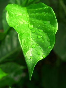 regndroppe, natur, löv, miljö, regndroppe, våt, fukt, dagg
