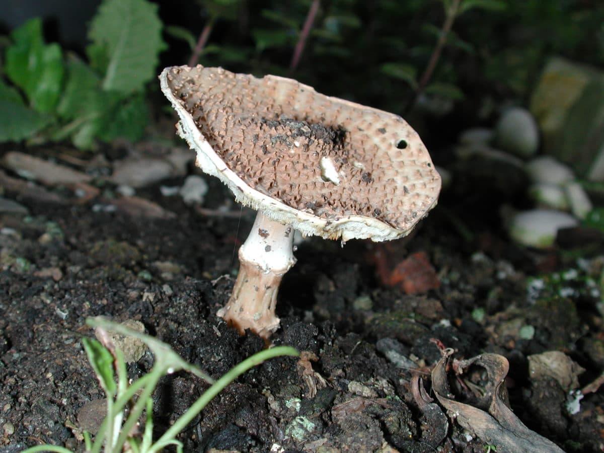 priroda, drvo, gljiva, detalj, gljiva, tla, organizam, tlo, vanjski