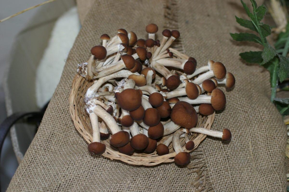 кухонный стол, грибы, грибы, вегетарианские, органические, диета, питание